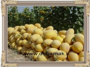 مزرعه حاجی آباد