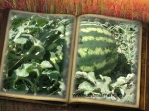 مزرعه حسین آباد