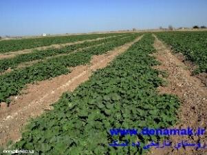 مزرعه هادی آباد