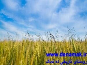 مزرعه قاسم آباد